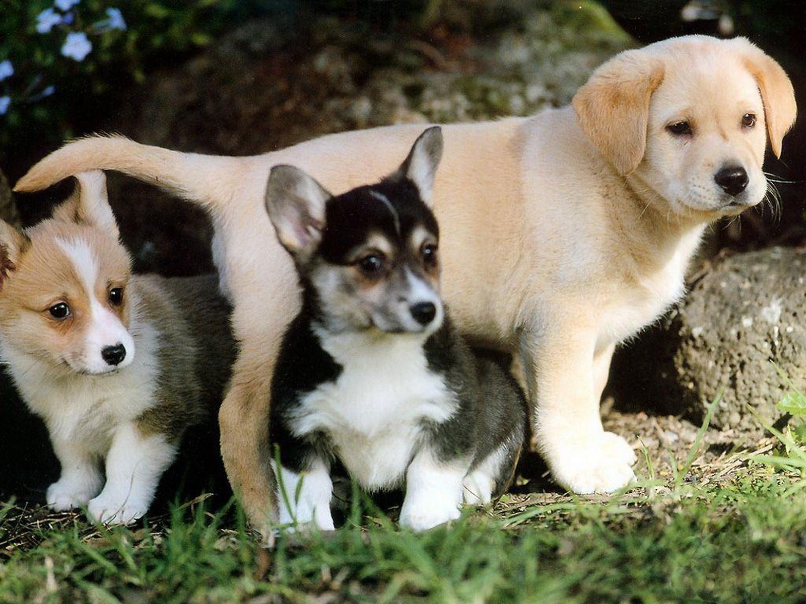http://4.bp.blogspot.com/-BvqxyjKqDvI/Tyw827PPorI/AAAAAAAAA3c/VtkYeDsbplo/s1600/23-Cute+Dog+1600x1200.jpg