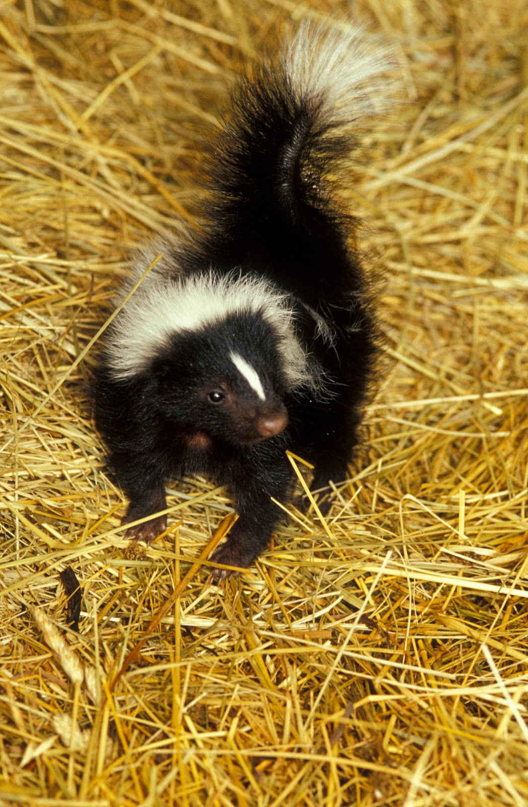 kentucky native plant and wildlife you got your dead skunk in the