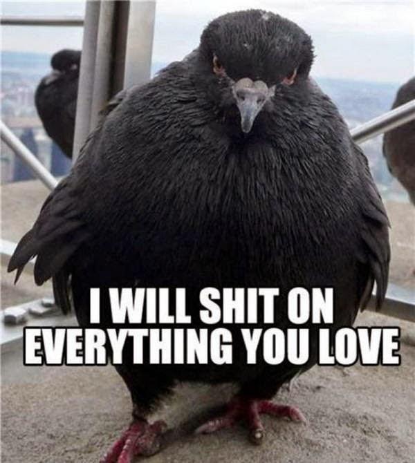 30 Funny animal captions - part 22 (30 pics), animal meme, funny captions, captioned pictures, funny animals