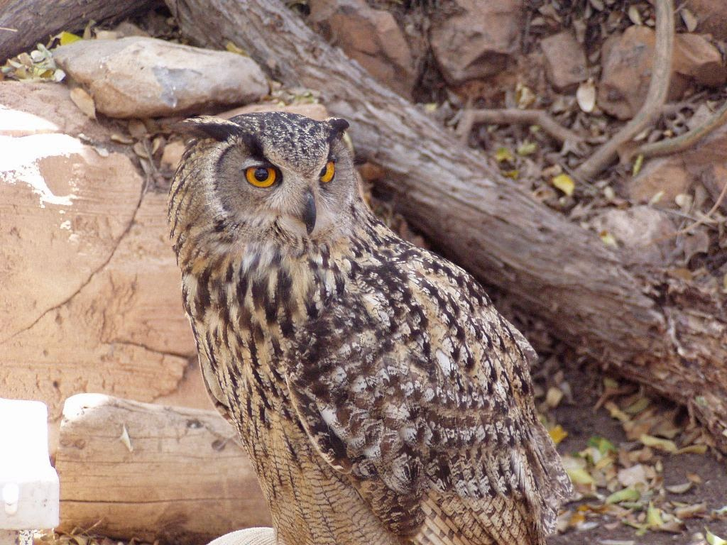 Jungle Park Tenerife Owl