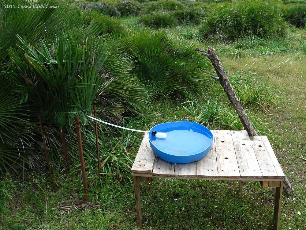 Quedada natural construcci n de un bebedero por chema cano for Bebederos para aves jardin