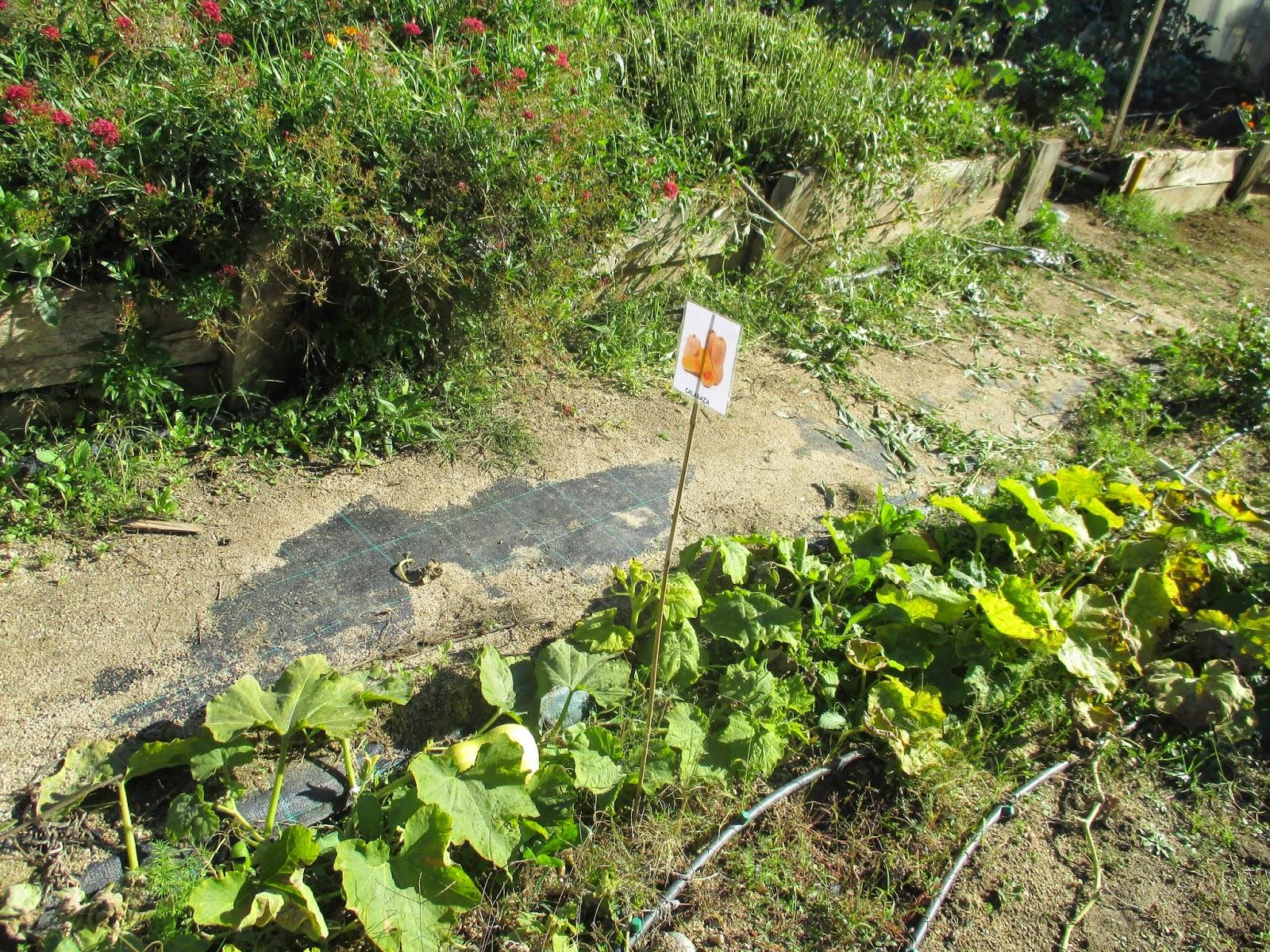En torno al huerto duendes en el huerto una actividad - Plantas de huerto ...