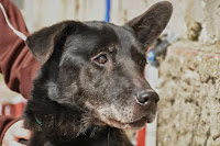 cane adozione canile