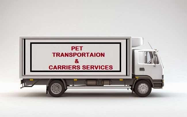 dog transport companies