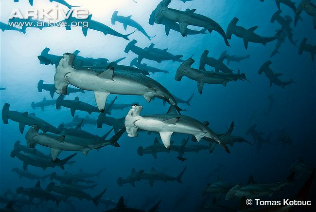 Colombia And Costa Rica Have Agreed To Create A Joint Taskforce Combat Illegal Fishing Shark Finning The Announcement Was Made By Rican