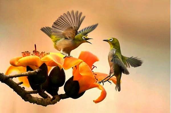 Membuat Nektar Buatan untuk Pleci dan Kolibri