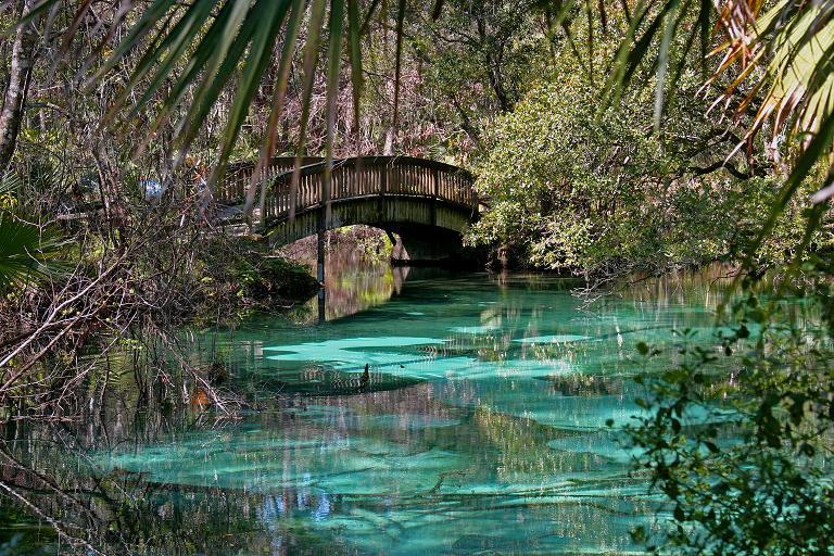 fern hammock springs christopher tozier   children u0027s author  the lightning forest      rh   christophertozier