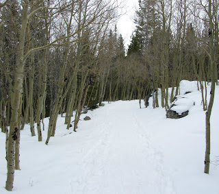 Aspens on the Alberta Falls Trail