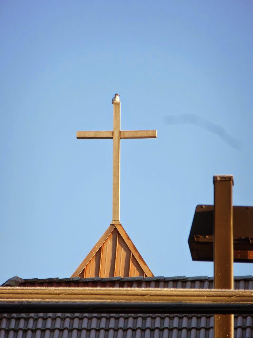 Seagull on church cross