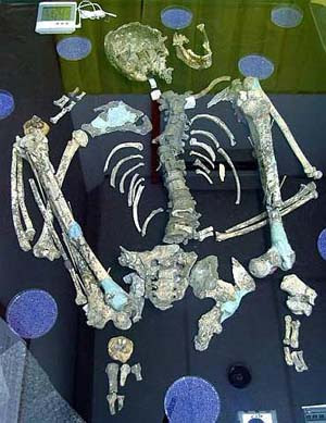 Old treasure: The Perak Man skeleton is being preserved with special care.