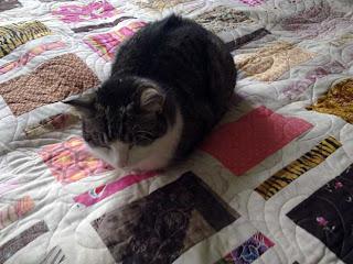 Söpö kissa oleskelee upeasti tikatun tilkkupeiton päällä