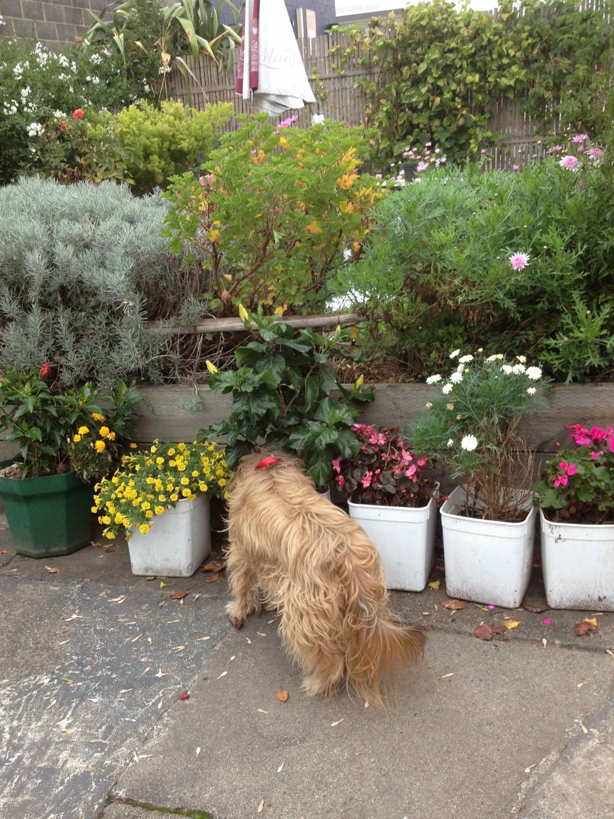 My dog may 2013 - Gardening for pets ...