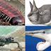 Ten strange extinct animals that you wished that they stayed extinct