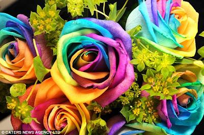 article 1282879 09D4757A000005DC 161 634x421 'قوس قزح' من أجمل الزهور التي قد تراها   حقن الزهور بصبغات مختلفة