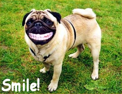 Funny Dog Smiling Images - CrystalGraphics