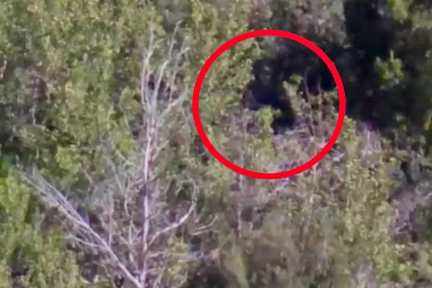 bigfoot myth or reality weird interesting facts