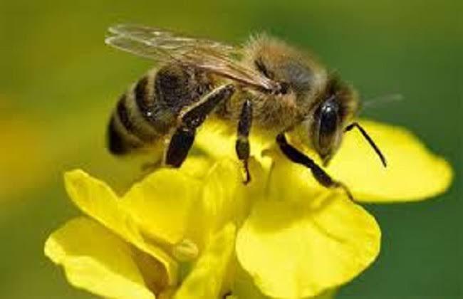 فيديوهات تربية النحل