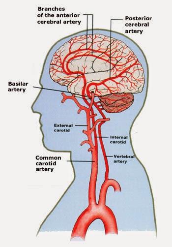 Bio Geo Nerd: Blood Brain Barrier