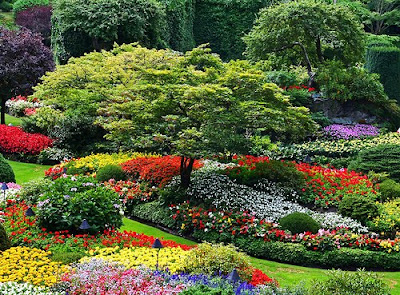 Amazing Garden Photos