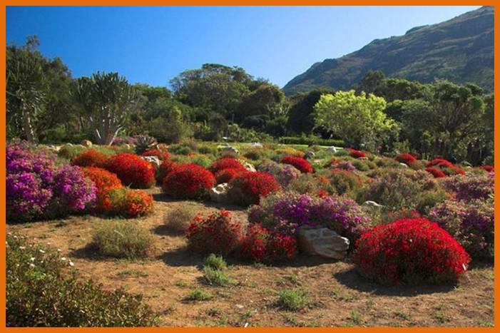 Get images beautiful gardens around the world for Jardin kirstenbosch