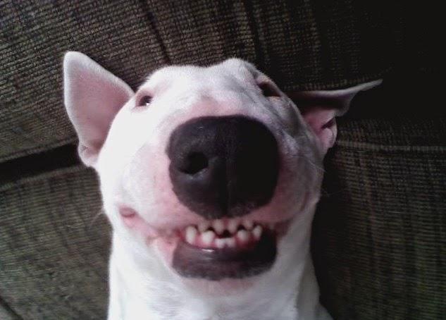 Las 5 mejores razas de perros!