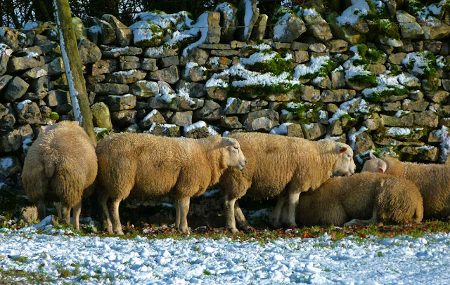 Sheep, A Bit About Britain