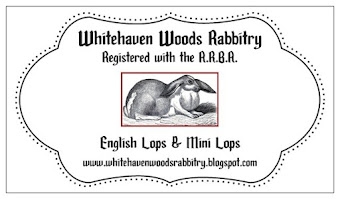 blog address rabbit