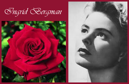 my maine garden blog celebrity rose 11 ingrid bergman. Black Bedroom Furniture Sets. Home Design Ideas