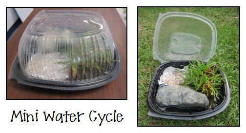Hands-on Water Cycle Fun! Create a mini water cycle using a rotisserie chicken container and demonstrate cloud formation in a jar.