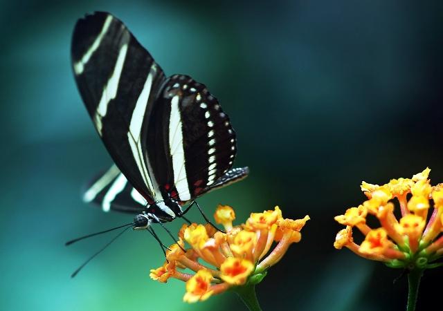 Butterfly small flowers desktop wallpaper