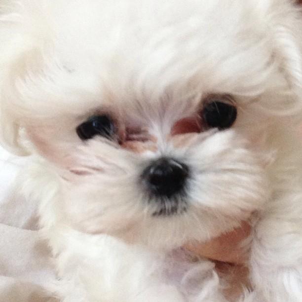"(CAPS) Taeyeon Instagram ""Prince, Ginger"" 130611+taeyeon+instagram2"