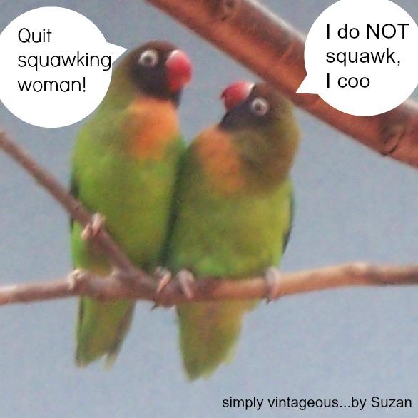 love birds, humour,
