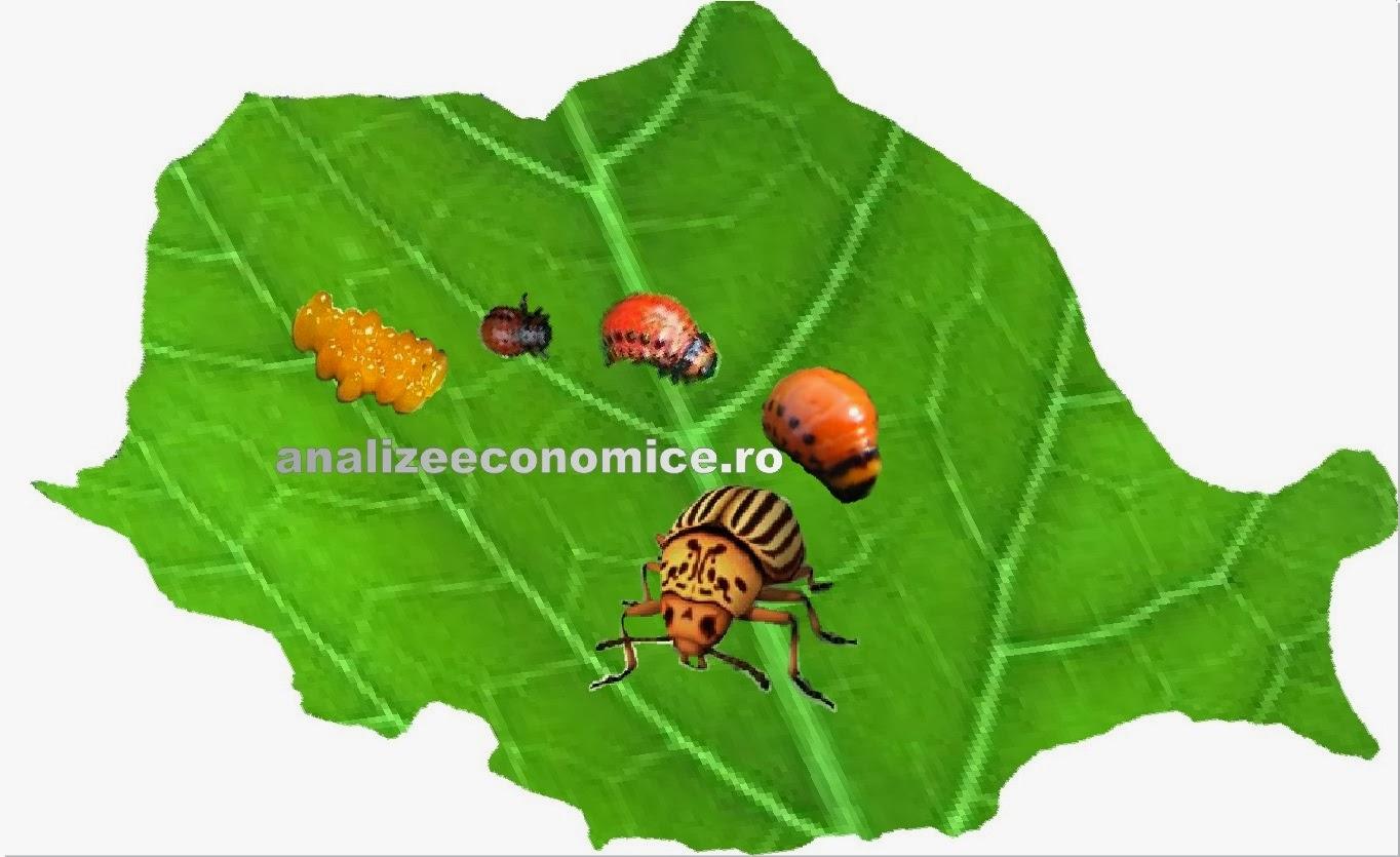 Geopolitica gândacului de Colorado