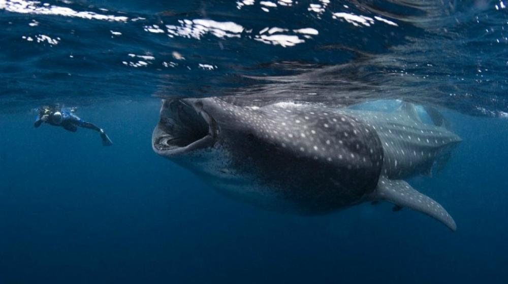 biggest fish in the world - photo #14