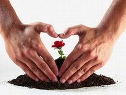 Semear com amor= saúde e properidade.