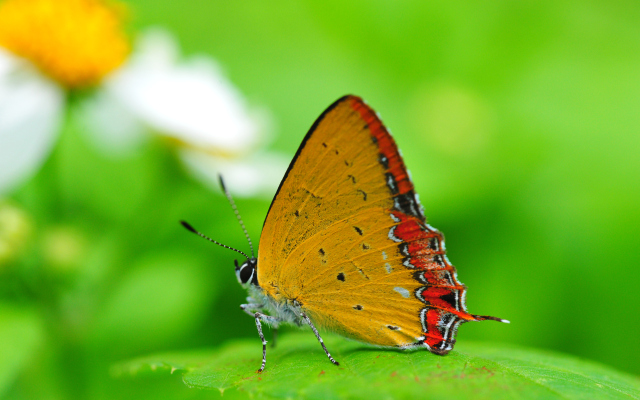 Windows 8 Butterfly Wallpapers