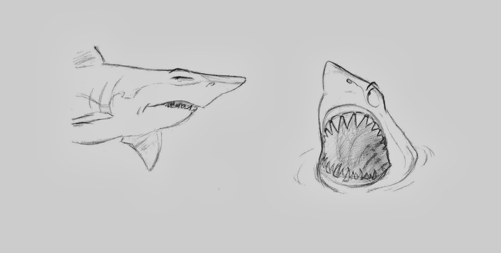 Shark sketch design, 2012