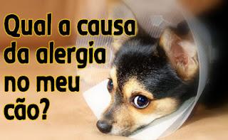 Cachorro-alergia