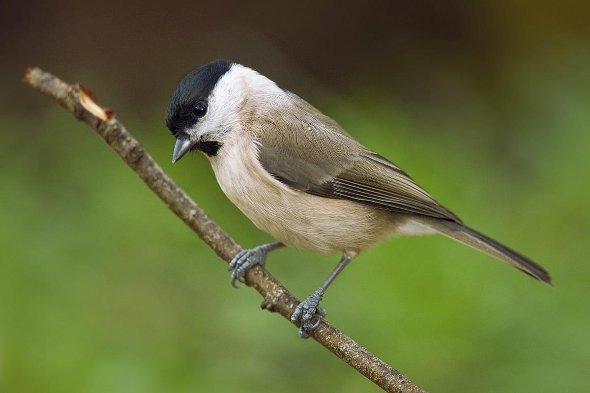 British Birds Photos Funny Animal