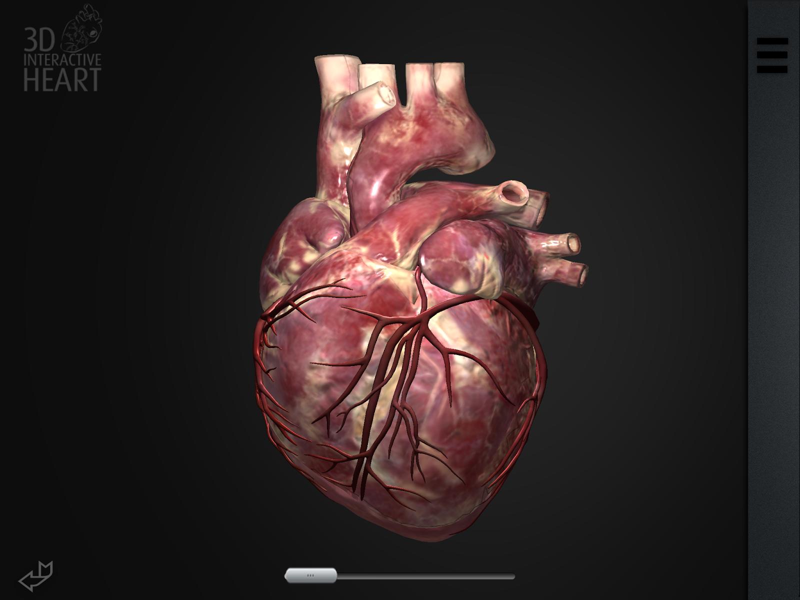 iPhone SDK: 3D Interactive Heart