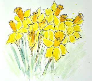 Ink and watercolour sketch of daffodils