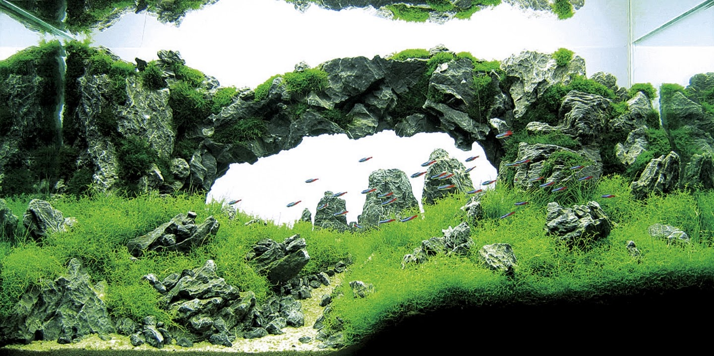 GNA [Get Nature Aquascape]: Gallery Aquascape