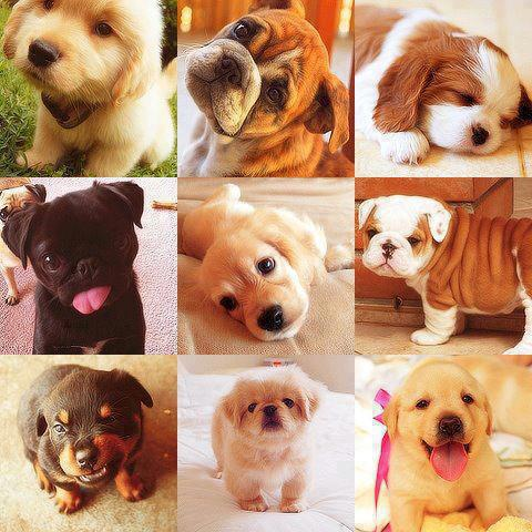Little puppies different face expressions image