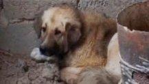 Собака, после наводнения ждет свою погибшую хозяйку вот уже не первый месяц