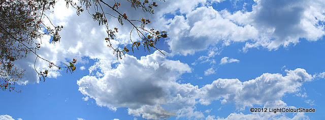 Black poplar twigs against stratocumulus clouds
