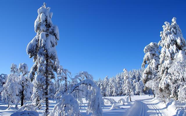 Bosques de Abetos en Invierno Paisajes Naturales