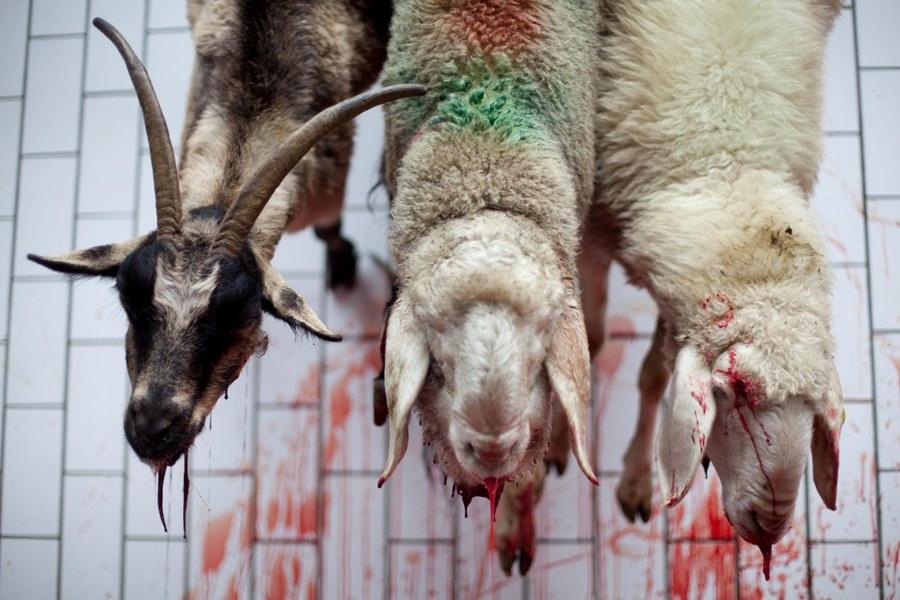 Hay algo mucho peor que la maldad, la crueldad y el salvajismo. Algo muchísimo peor: La hipocresía.
