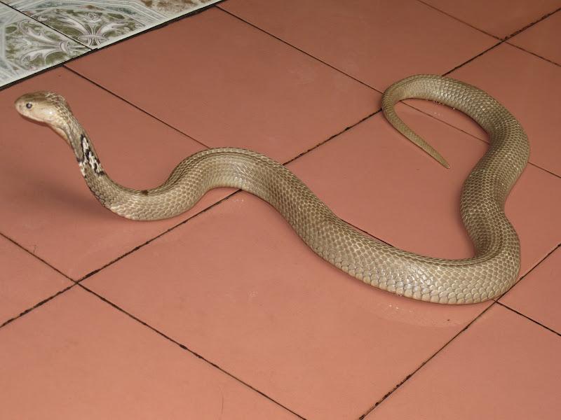 Word from bob at the snake restaurant for 03 cobra floor mats