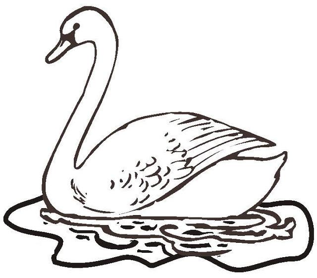 Dibujos de Aves ~ Vida Blogger