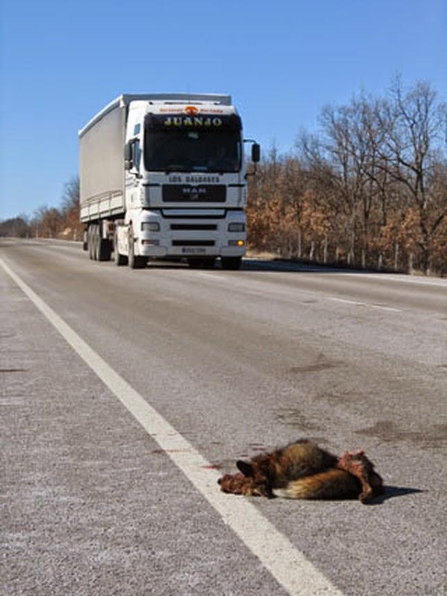 Atropello de animales - Jefatura provincial de trafico de albacete ...